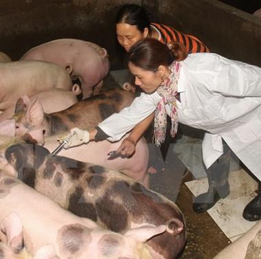 Việt Nam thúc đẩy nghiên cứu sản xuất vắc xin lở mồm long móng