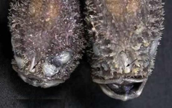 """Sock với những động vật có nguồn gốc từ """"địa ngục"""""""