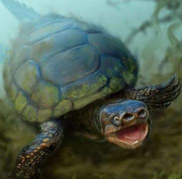 Tìm thấy hóa thạch rùa mũi lợn 76 triệu năm