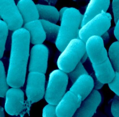 Phát hiện cách nói chuyện bí mật của các vi khuẩn