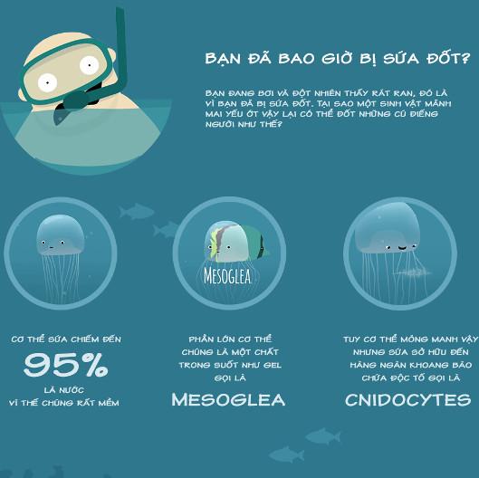 Bạn có biết sứa đốt chúng ta như thế nào?