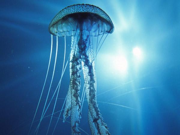 Sát thủ trong suốt dưới đại dương