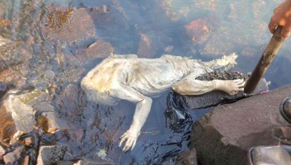 Phát hiện xác sinh vật bí ẩn dạt vào bờ Paraguay