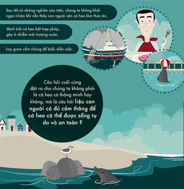 Cá heo thông minh đến mức nào?