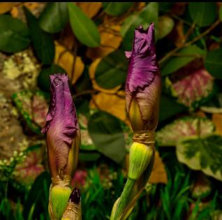 Video: Khoảnh khắc những đóa hoa bung cánh tuyệt đẹp