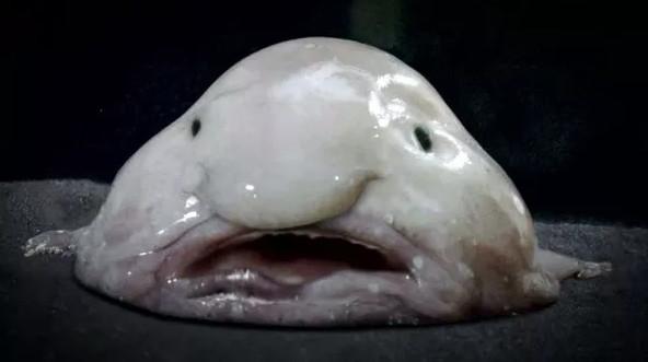 Loài cá được bình chọn là chuẩn mực của cái xấu