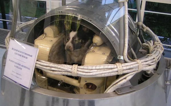 Ngày 3/11/1957 - Laika, chú chó đầu tiên bay lên vũ trụ