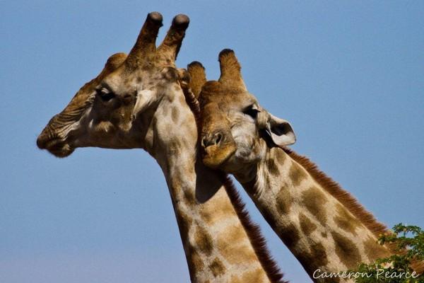 Sự đồng tính trong thế giới loài vật