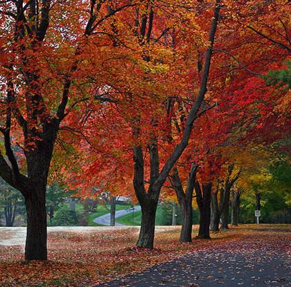 Biến đổi khí hậu sẽ làm thay đổi màu sắc của mùa thu?