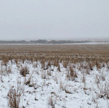 """Nông dân Canada chụp được ảnh cừu """"tàng hình"""""""