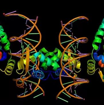 Loài người biết nói là nhờ một đột biến gen