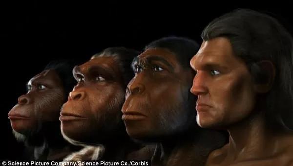 Video: Quá trình mặt người tiến hóa dài 6 triệu năm chỉ trong 1 phút