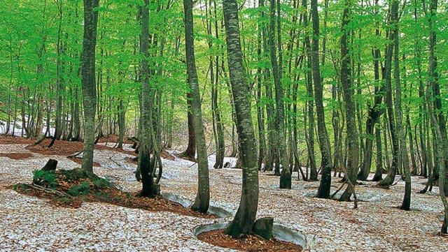 12 di sản thiên nhiên độc đáo của thế giới