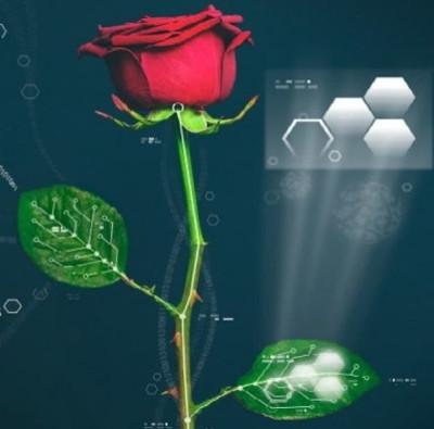 """Tạo ra """"hoa hồng điện tử"""" đầu tiên thế giới"""