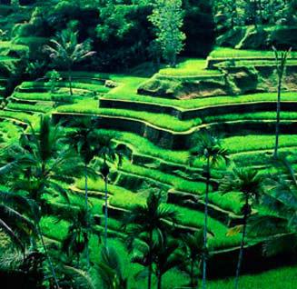 Hệ thống canh tác Subak ở Bali