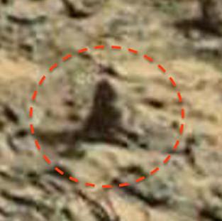 Phát hiện hình ảnh con khỉ ngồi trên sao Hỏa?