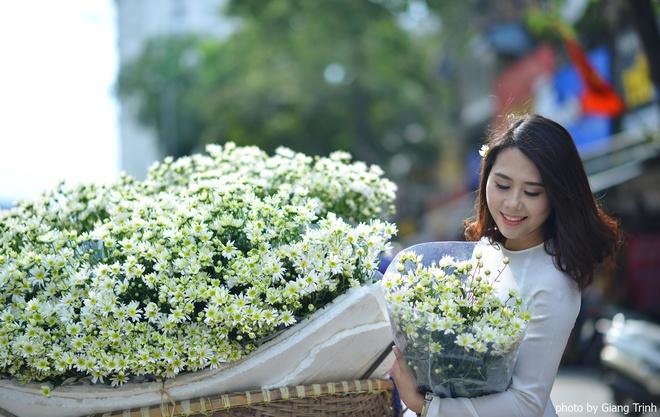 Cúc họa mi báo hiệu mùa đông trên phố Hà Nội