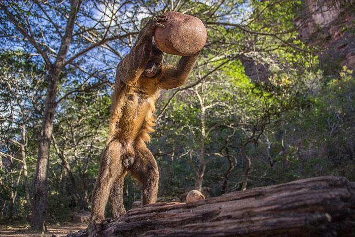 10 bức ảnh thiên nhiên đẹp nhất năm 2015
