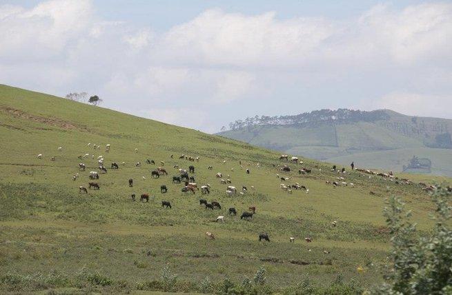 Cuộc chiến sinh tồn trên đồng cỏ Kenya