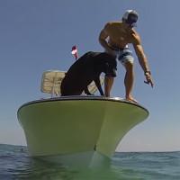 Video: Chó lặn biển bắt tôm hùm nhanh như cắt