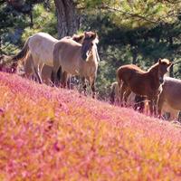 Đồi cỏ hồng lãng mạn ở Đà Lạt