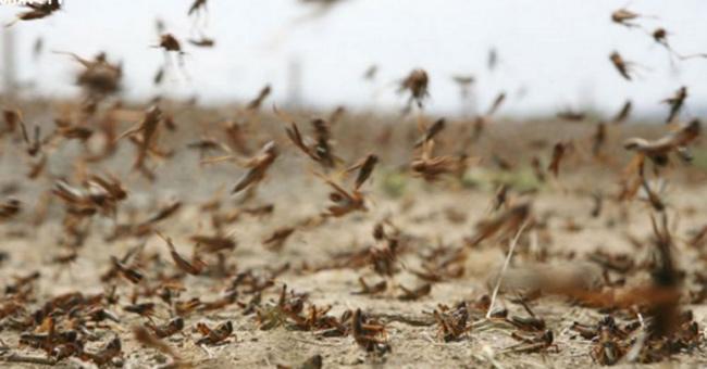 Các loài côn trùng nguy hiểm nhất thế giới