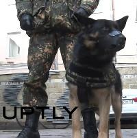Video: Nga phát triển áo chống đạn cho cảnh khuyển