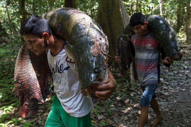"""Cận cảnh loài """"quái vật nước ngọt lớn nhất hành tinh"""" ở Amazon"""