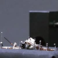 Video: Làm thế nào để rút sạch tơ bên trong một con nhện?