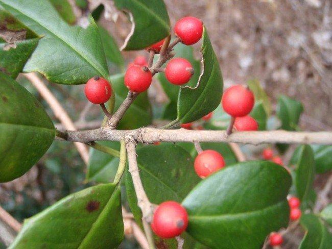 Những loại quả tuyệt đối không ăn nếu lạc vào rừng