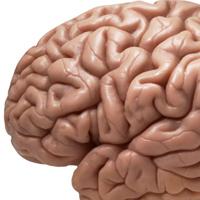 Những sự thật gây sốc về bộ não con người