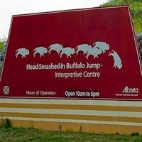 Vực bẫy trâu Head-Smashed-In - Canada