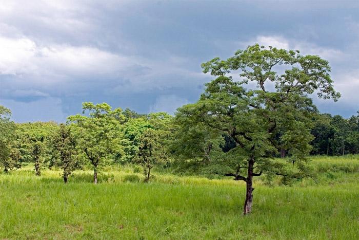 Công viên quốc gia Chitwan nằm ở chân của dãy Himalaya