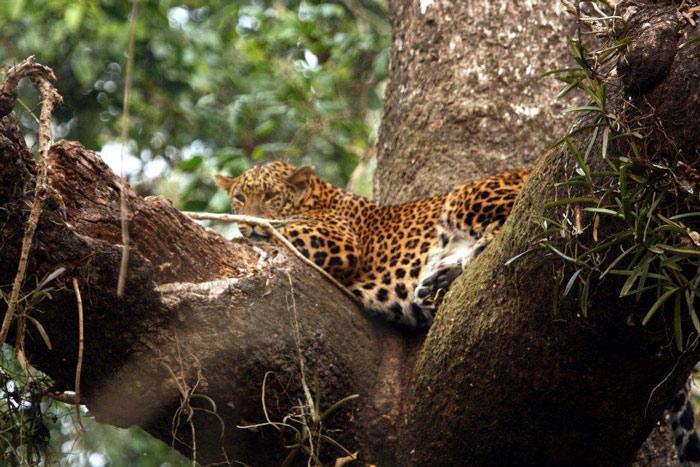 Mặc dù được bảo vệ nghiêm ngặt song nạn săn bắt trộm, đặc biệt là trộm sừng tê giác vẫn đang là mối đe dọa đến môi trường tự nhiên và ảnh hưởng đến sự phát triển tại Công viên Chitwan.