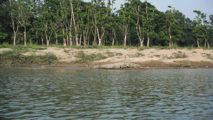 Diện tích rừng trong công viên quốc gia Chitwan chiếm tới 60% tổng diện tích toàn bộ công viên