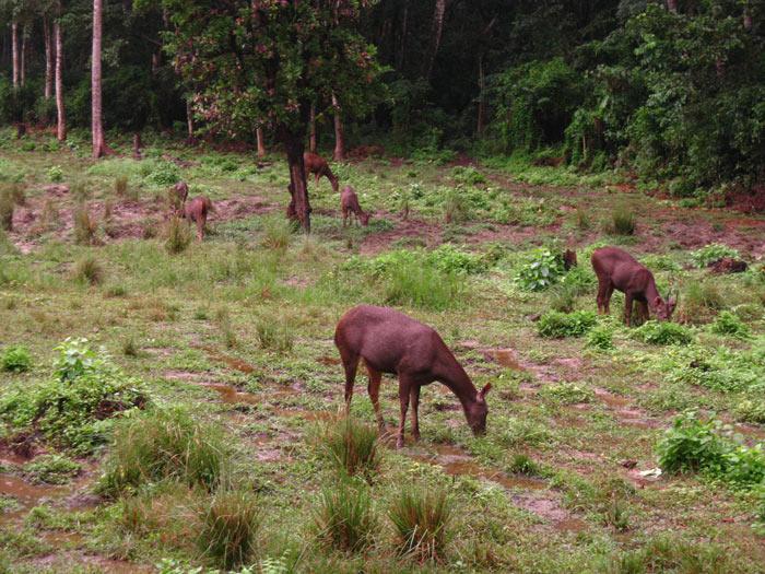 Công viên quốc gia Chitwan có một thảm thực vật đặc biệt phong phú, một thế giới động vật đa dạng