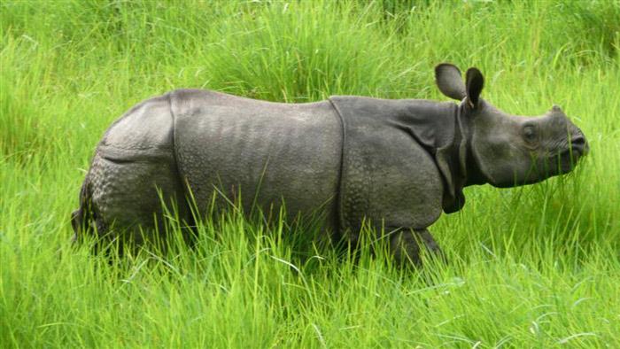 Trong công viên quốc gia Chitwan còn khoảng 400 cá thể tê giác Châu Á vô cùng quý hiếm