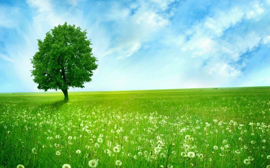 Bồ công anh là loài hoa được rất nhiều người yêu thích nên cũng có rất nhiều sự tích xung quanh nó.