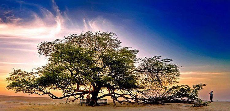 Cây sinh mệnh nằm giữa sa mạc ở Bahrain và tồn tại được khi gần đấy chẳng có một nguồn nước sạch nào. Cái cây đã khoảng 400 tuổi và cao 9,75 mét.