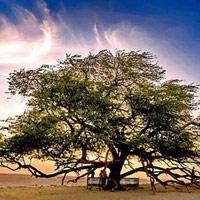 10 loài cây kì lạ bậc nhất trên Trái đất