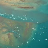 Video: Bắt gặp đàn cá heo trắng khổng lồ cực quý hiếm