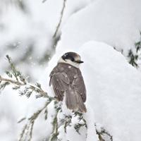 Ngắm những hình ảnh tuyết rơi mùa đông đẹp nhất trên khắp thế giới