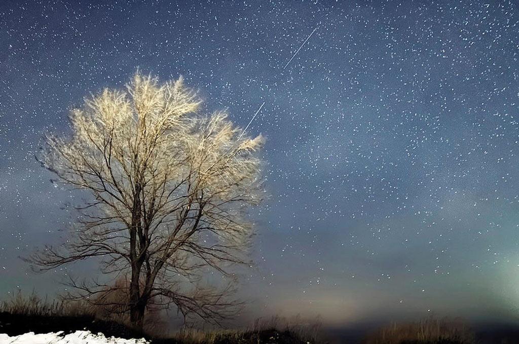 Sao băng và nhánh cây. Ảnh do nhiếp ảnh gia người Nga, Vlad Stepanov, chụp lại.