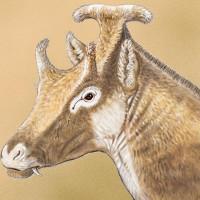 Phát hiện hóa thạch loài hươu cổ đại kỳ lạ