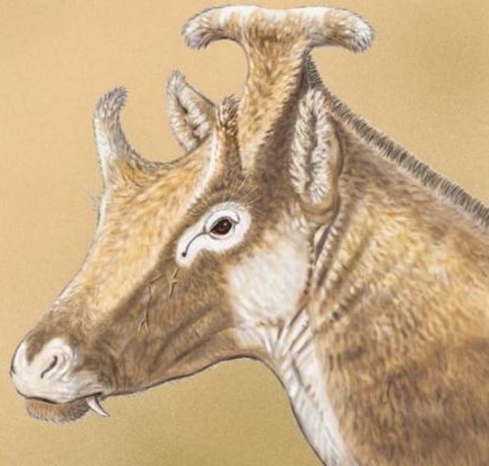 Hình ảnh hóa thạch loài hươu cổ đại mới được phát hiện.