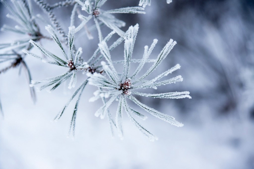 Nó thường hình thành vào những đêm đông, trời lặng gió, quang mây. Tuy nhiên, sương muối không mặn mà chỉ trắng như muối, gần giống với lớp tuyết ở trong khoang lạnh của tủ lạnh.