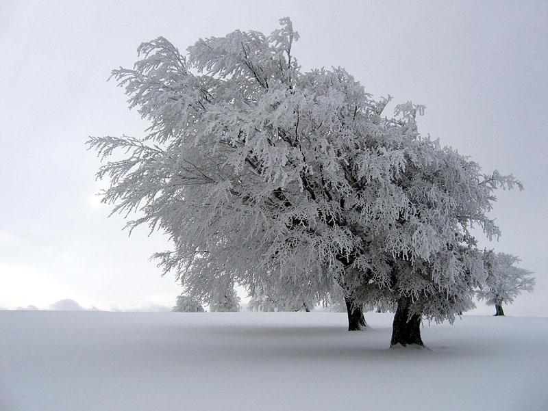 Sương băng cứng được hình thành khi các giọt nước trong lớp sương mù bị đóng băng bao quanh bên ngoài vật thế. Nó thường được nhìn thấy trên những loại cây mọc trên đỉnh núi cao vào mùa đông, khi các đám mây tầng thấp gây ra sương mù đóng băng.