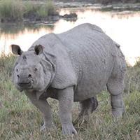 Khu bảo tồn động vật hoang dã Manas