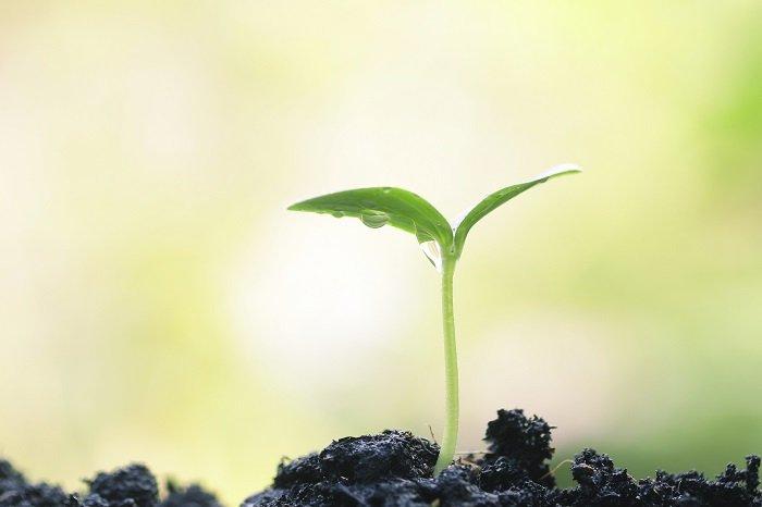 Nhiều nhà khoa học cho rằng thực vật cũng có trí thông minh.