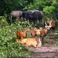 Vườn quốc gia Kaziranga